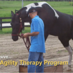 Equine Agility Therapy